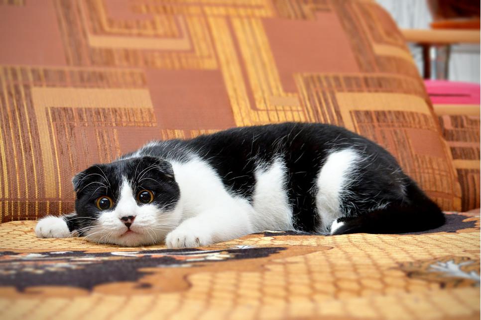 Zabawa z kotem laserem może być pomocna w niektórych sytuacjach. Jednak niewłaściwe jego używanie kończy się problemami zdrowotnymi i behawioralnymi.