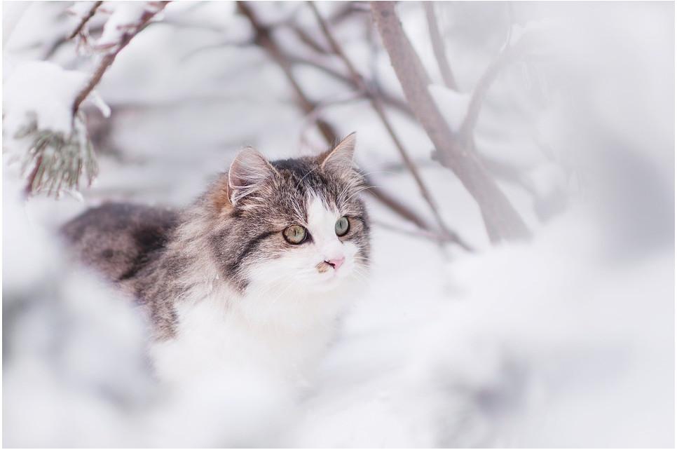 Jak zimą dbać o koty?