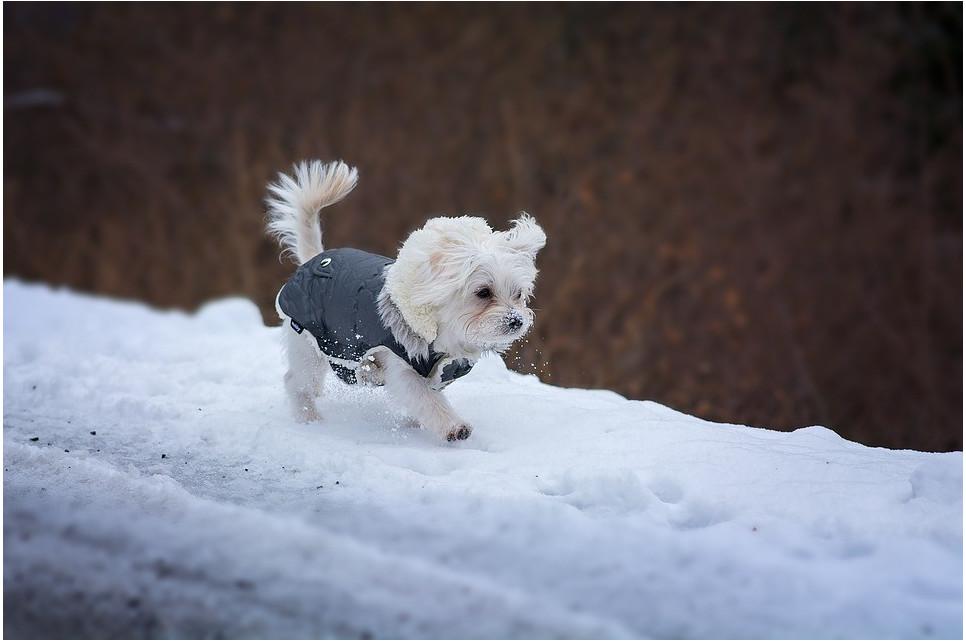 Zimowe spacery z psem - o czym pamiętać?