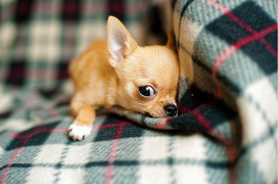 Pies sika w mieszkaniu. Dlaczego znakuje teren i jak temu zapobiec?