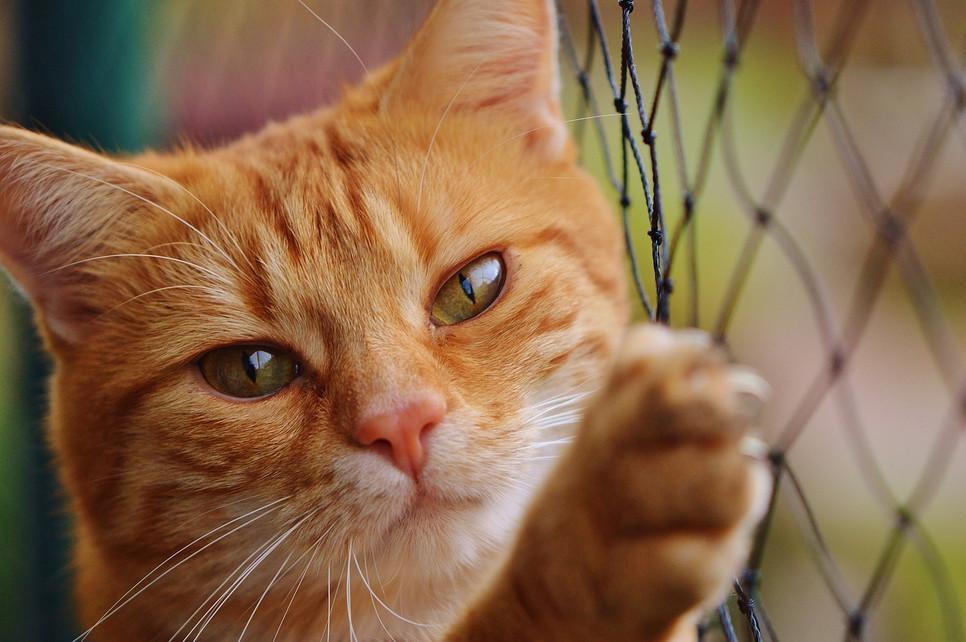 Stwórz bezpieczne miejsce dla swojego kota. Zabezpieczenie okien i balkonów.