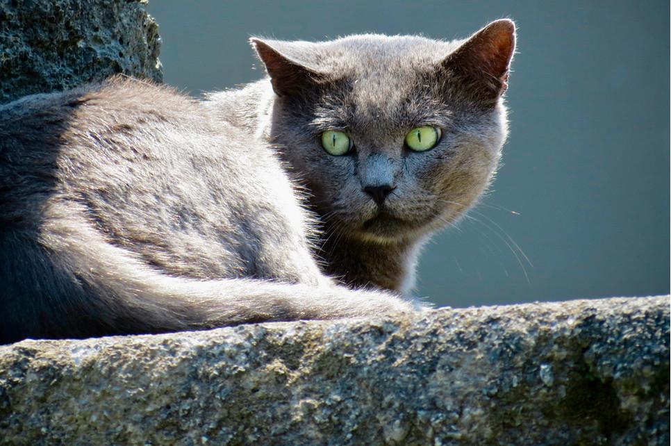 Stresu nie da się całkowicie wyeliminować z codzienności, jednak warto próbować go zminimalizować i nauczyć koty odpowiednio sobie z nim radzić.