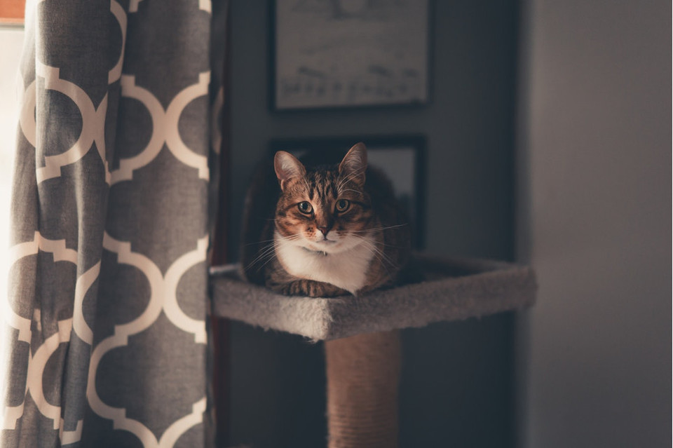 Jedno z najpotrzebniejszych akcesoriów dla domowego kota to drapak. Zobacz, jak w prosty sposób zrobić go samodzielnie.