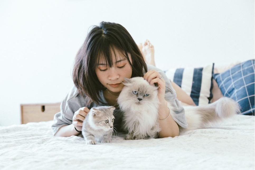 Jak nazwać kota? Liczba pomysłów jest nieograniczona. Najważniejsze, by pupil nauczył się na swoje imię reagować.