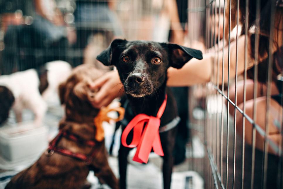 Czy klatka dla psa w domu jest dobrym rozwiązaniem? Czy sprawdza się klatka dla szczeniaka?