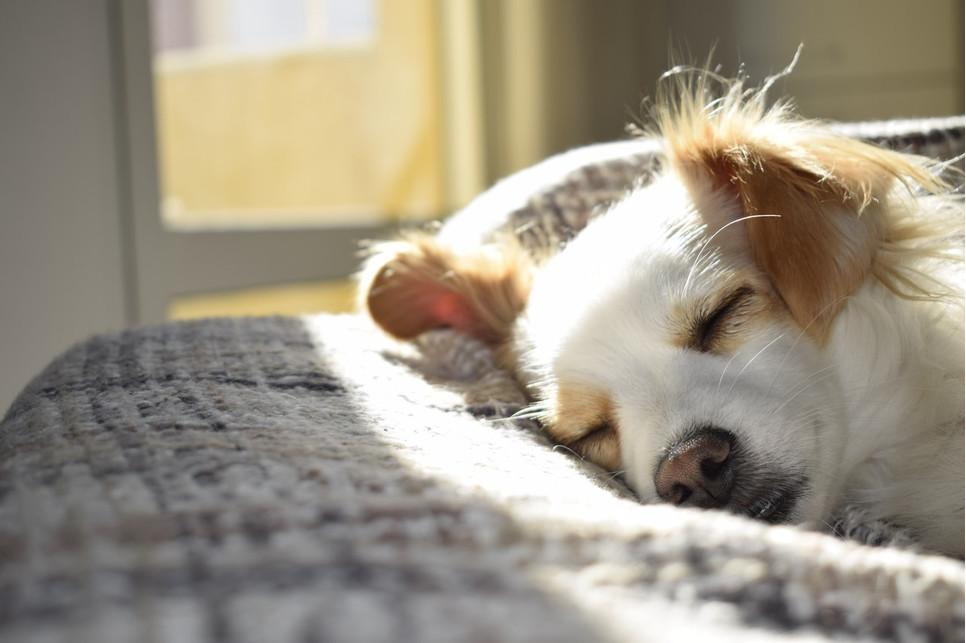 Padaczka u psa to jedna z częstszych chorób neurologicznych. Może mieć różną postać i podłoże.