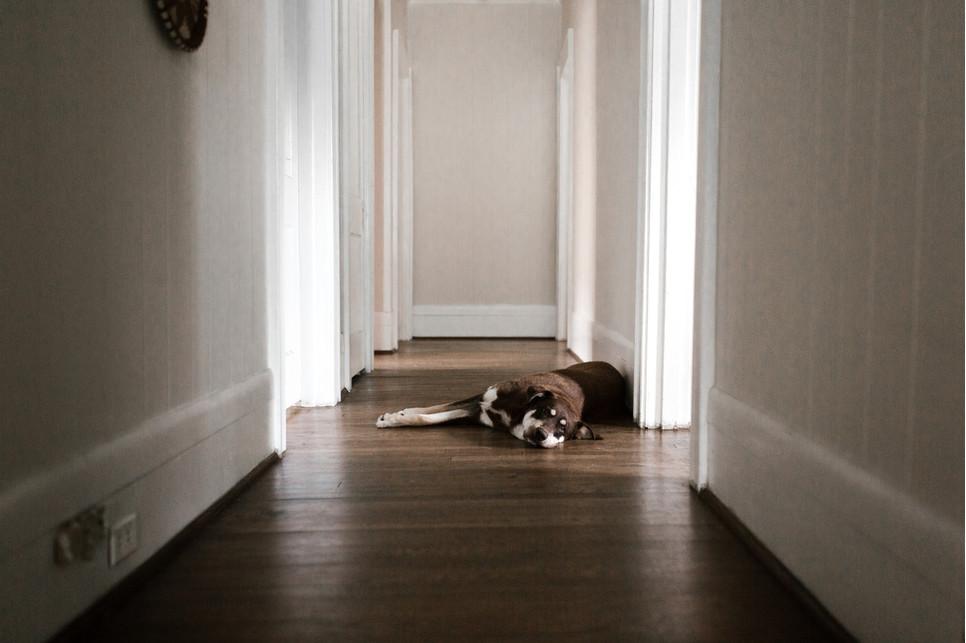 Toaleta dla psa w domu? W jakich sytuacjach się sprawdzi? Czy warto nauczyć psa załatwiać się w domu?