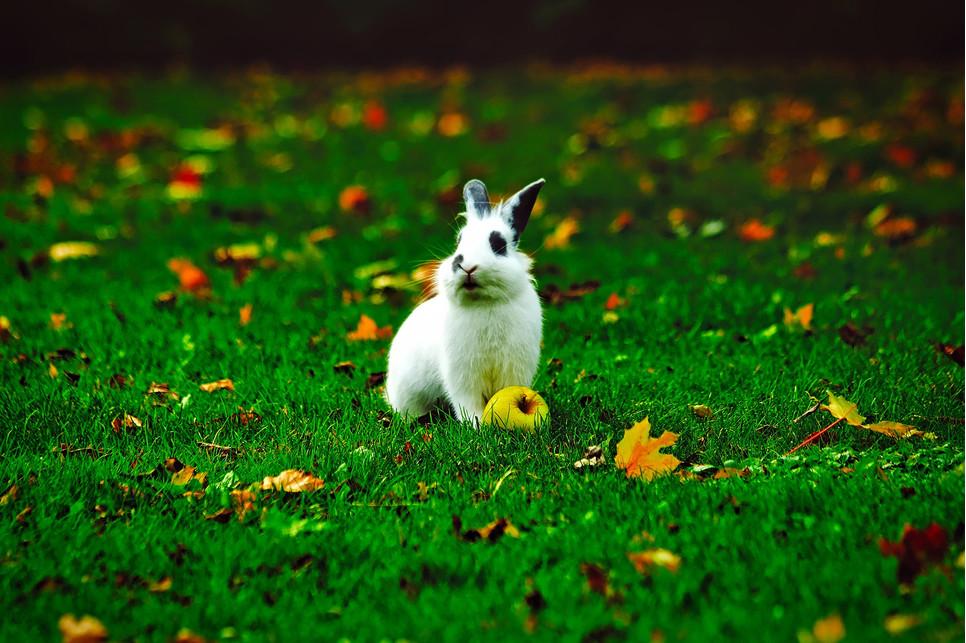 Czy klatka z wybiegiem dla królika to dobry pomysł? Przeczytaj, jak zrobić wybieg dla królika w domu.