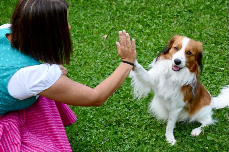 Wybór psa powinien być podyktowany nie tylko wyglądem i renomą rasy, ale przede wszystkim naszymi możliwościami i stylem życia.