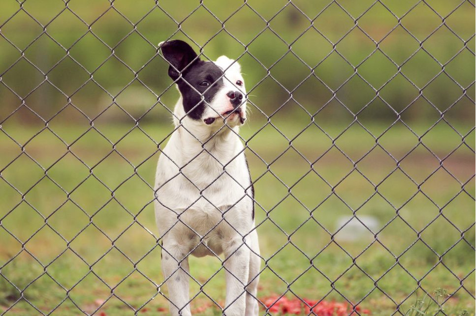 Jak działa elektryczny pastuch dla psów?