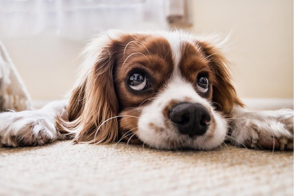Szczeniak i kociak w domu - jak się przygotować do połączenia psa i kota?