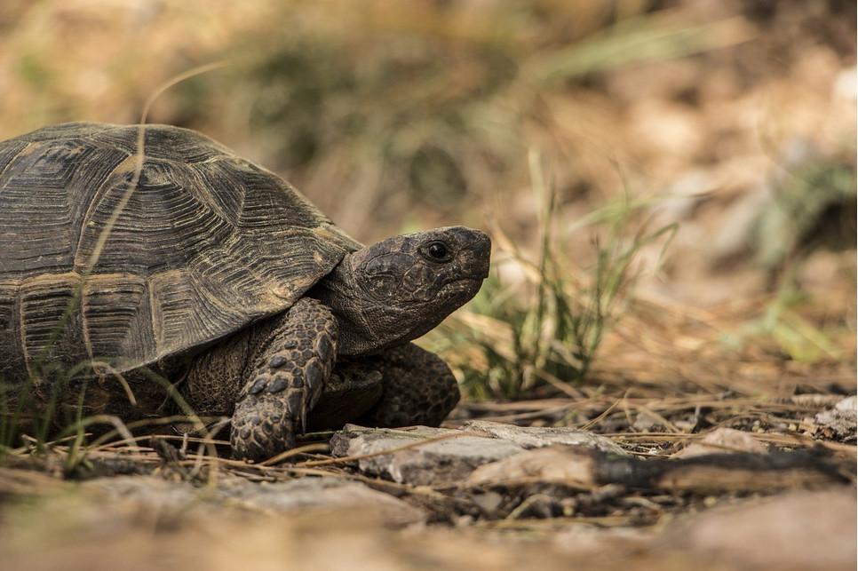 Jak dbać o żółwia lądowego?
