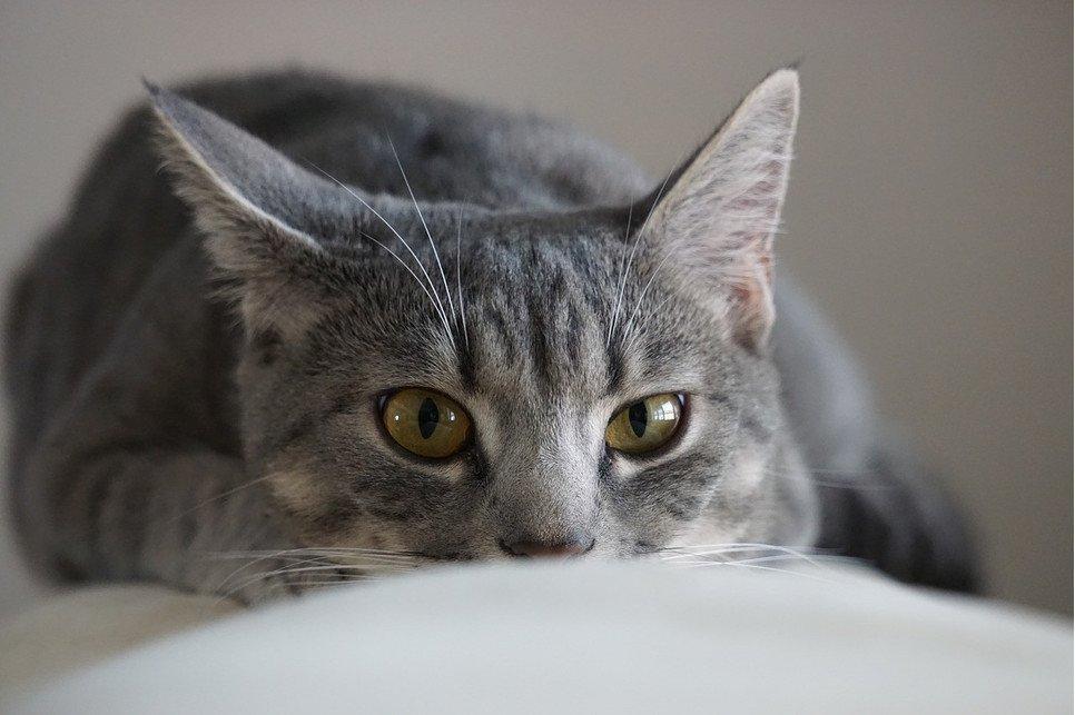Kot a wyjazd na wakacje? Porady weterynarza