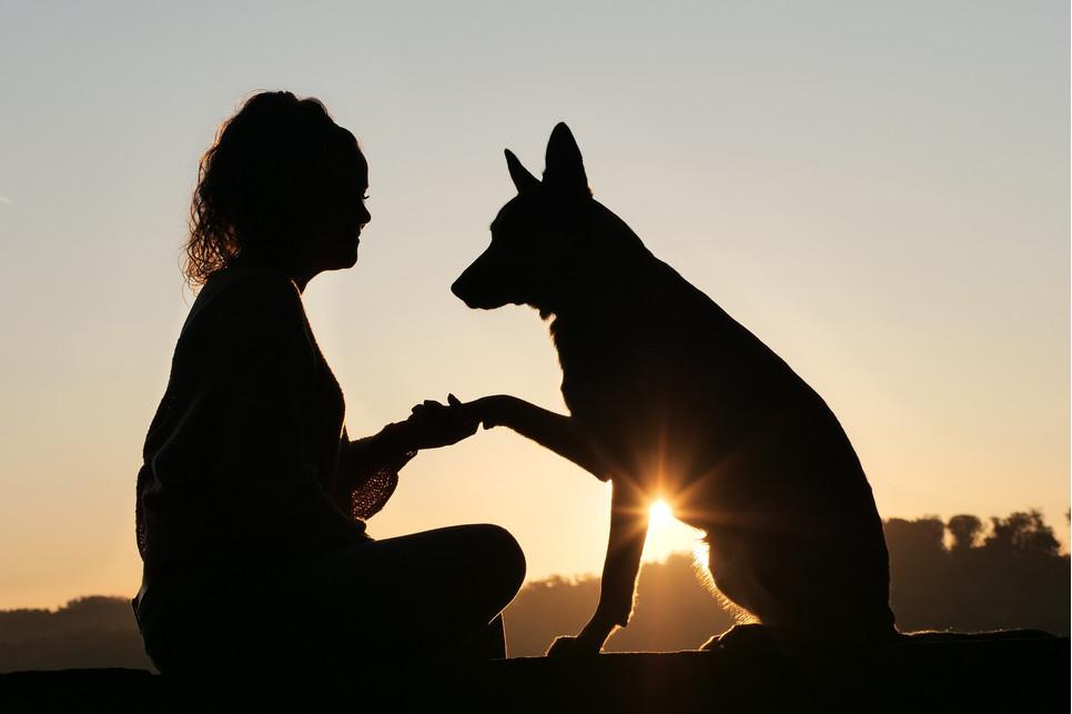 Jak sprawić, by Twój pies Ci zaufał? Poznaj kilka sposobów.