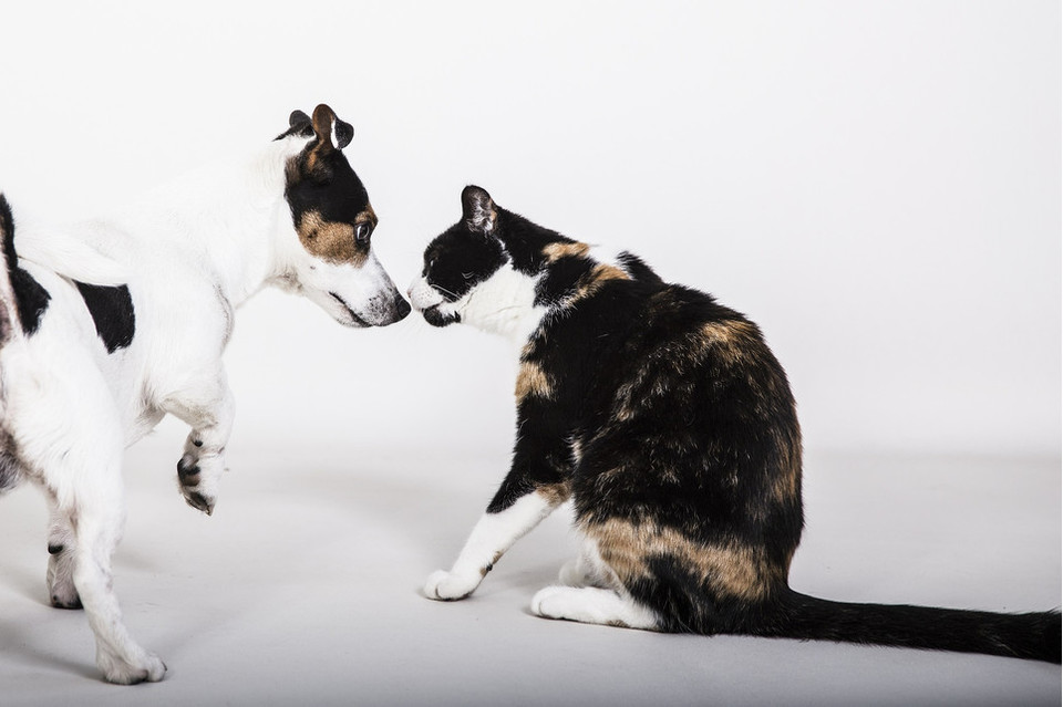 Stres wpływa na zachowanie i zdrowie zwierzęcia. Poznaj jego przyczyny, aby skutecznie pomóc swojemu zwierzęciu.