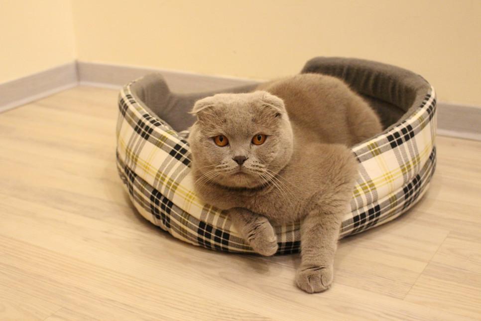 Niewydolność nerek u kota prowadzi do ciężkiego zatrucia organizmu. Należy szybko reagować na objawy choroby.