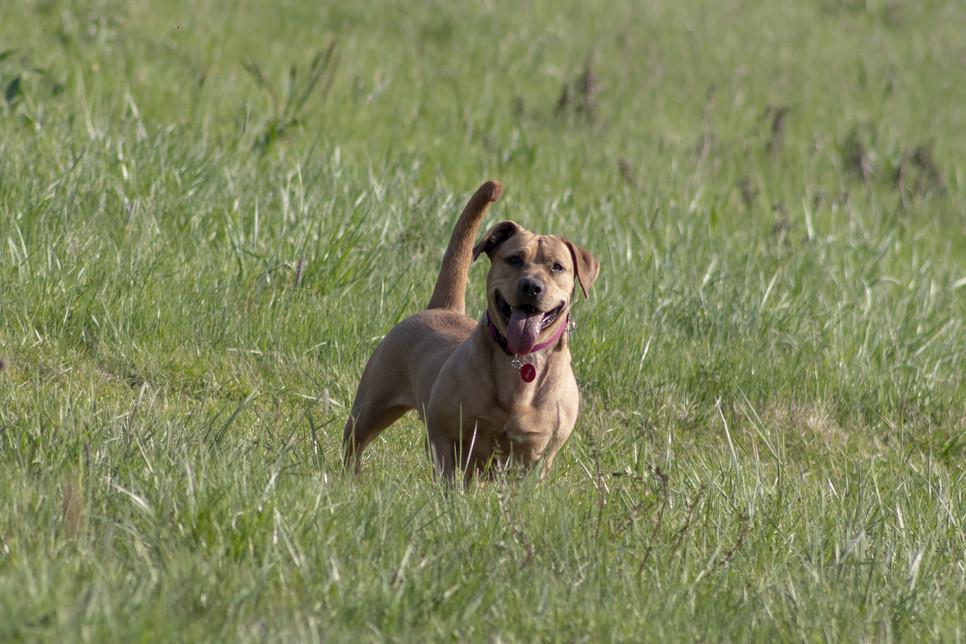 Chorobom skóry u psa, zwłaszcza spowodowanym przez infekcje i pasożyty, można zapobiec dzięki odpowiedniej pielęgnacji.