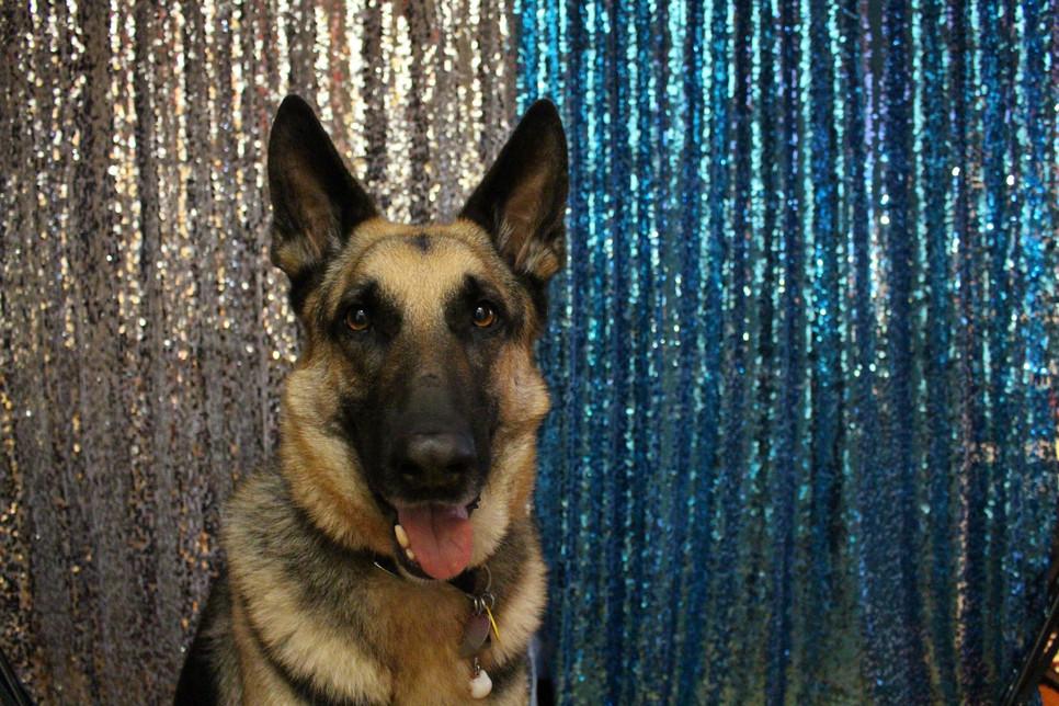 Pies policyjny ma zwykle jednego przewodnika. Nie zawsze pracuje jako pies tropiący czy patrolowy.