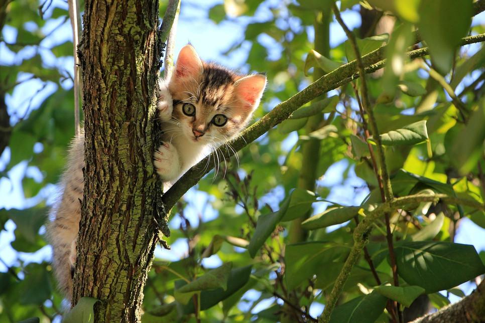 Widok własnego kota na drzewie może przerazić opiekuna. Rozwiązaniem problemu jest jednak zwykle zachowanie spokoju.