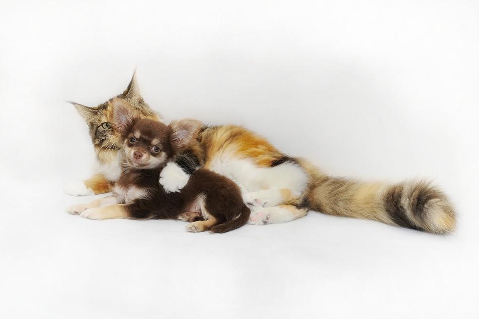 Pies i kot żyjące w zgodzie pod jednym dachem to możliwe do uzyskania połączenie. Wymaga jednak odpowiedniego przygotowania i socjalizacji.