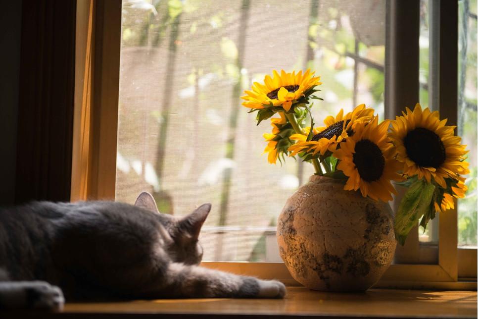Sprawdź jak pomóc zwierzęciu uporać się z problemem i jakie wprowadzić zmiany, aby problem zaparć u kota zniknął raz na zawsze.