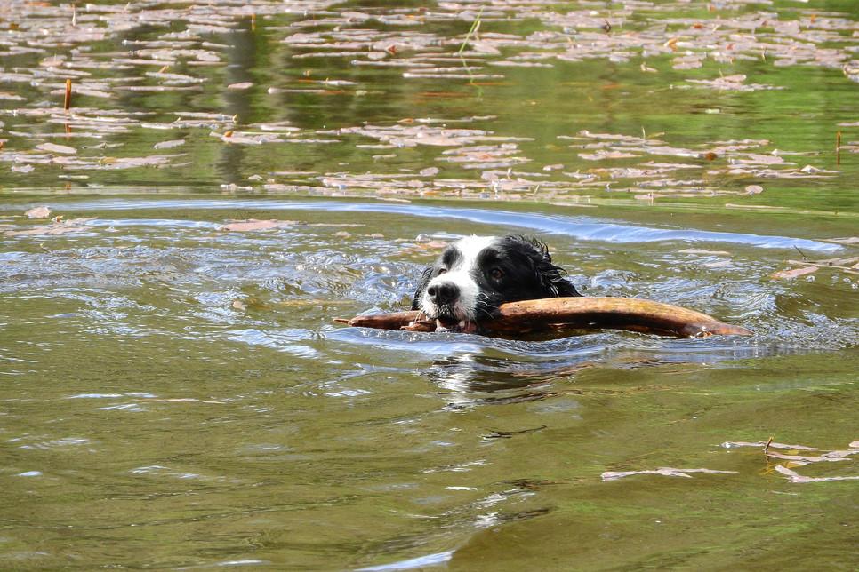 Aportowanie to świetny sposób na wspólne spędzanie czasu z psem. Poprawia kondycję i ćwiczy umysł psa.