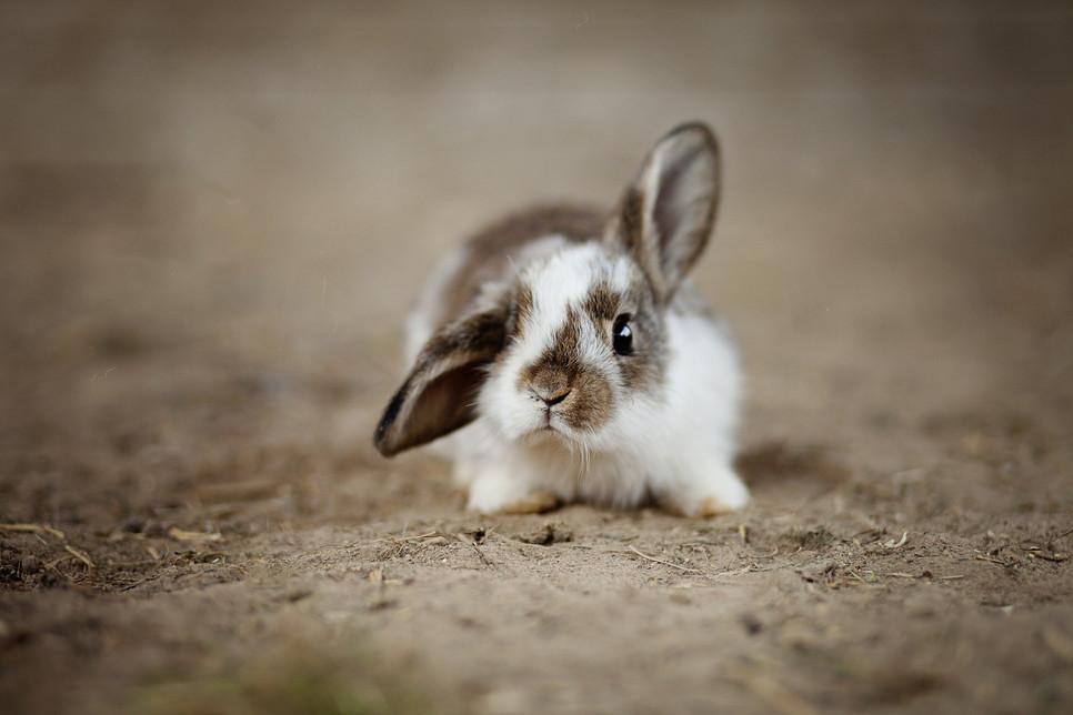 Czym się kierować wybierając imię dla królika? Inspiracje na wyjątkowe imię dla uszatka.