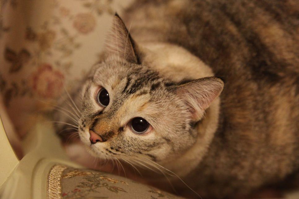 Kot i zielony ogórek, czy kot boi się ogórków? Prawdziwy problem czy kolejny trend w Internecie?