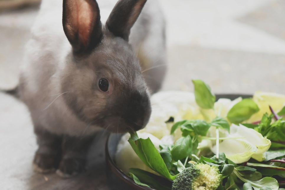 Zdrowym urozmaiceniem diety królika są zioła. Sprawdź jakie wybrać.