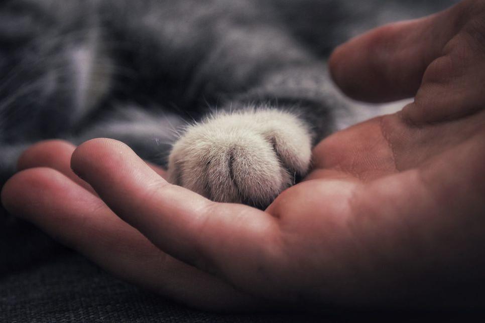 Mruczenie kota jest formą komunikacji z innymi zwierzętami oraz z ludźmi.
