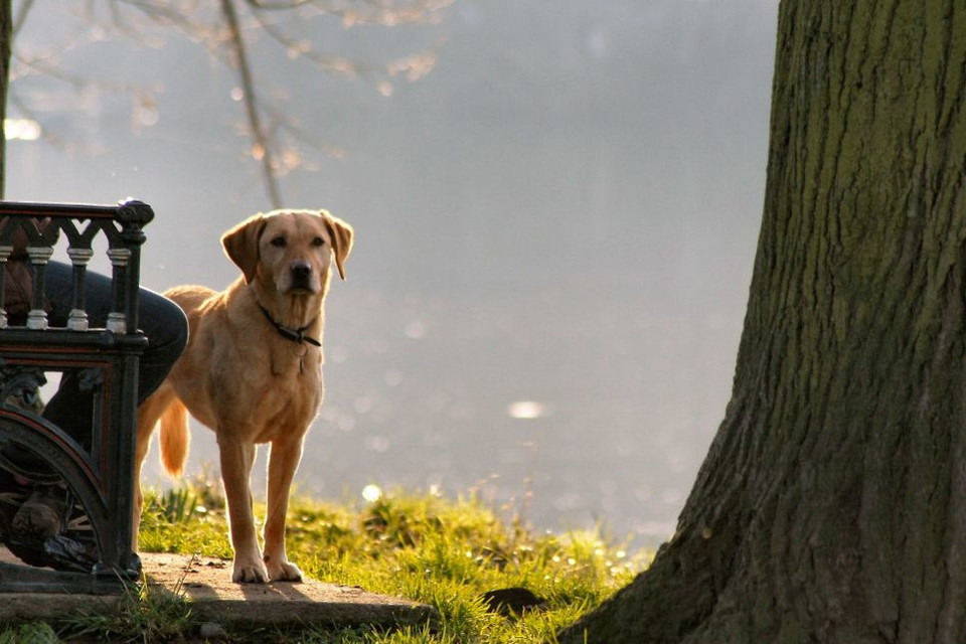 Jak oduczyć psa skakania i podgryzania, co moża zrobić, by pies nie skakał na inne psy, w artykule praktyczne porady.