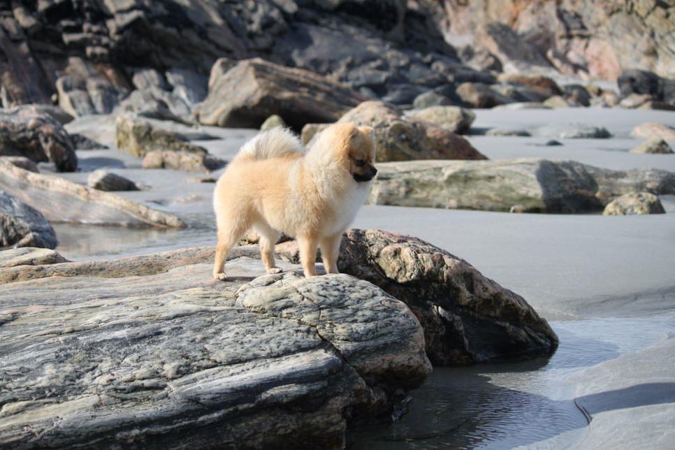 Pomeranian to malutki pies do towarzystwa, który w wyniku niewłaściwej pielęgnacji może poważnie ucierpieć na zdrowiu i wyglądzie. Sprawdź jak prawidłowo zadbać o pomaraniana.