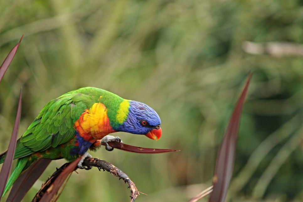 Pasożyty u papug sieją duże spustoszenie w ich organizmie, a wiele z nich w początkowej fazie jest trudna do zauważenia.