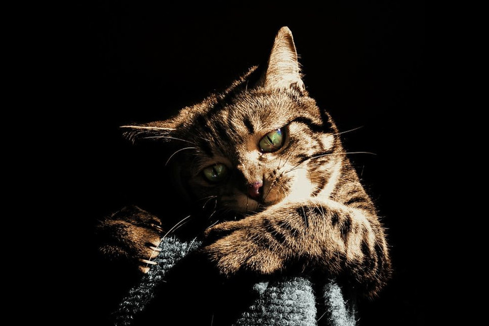 Wścieklizna jest nieuleczalną i śmiertelną chorobą, która przenoszona jest poprzez ugryzienie dzikiego zwierzęcia.