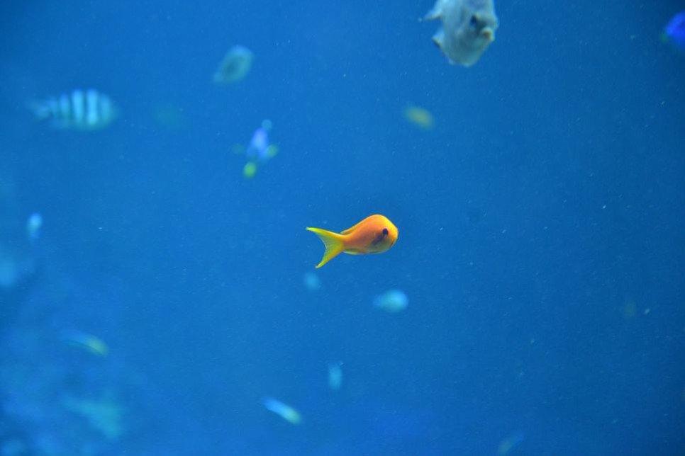 Poznaj gatunki ryb słodkowodnych, zobacz ich opis i stwórz swój podwodny świat.