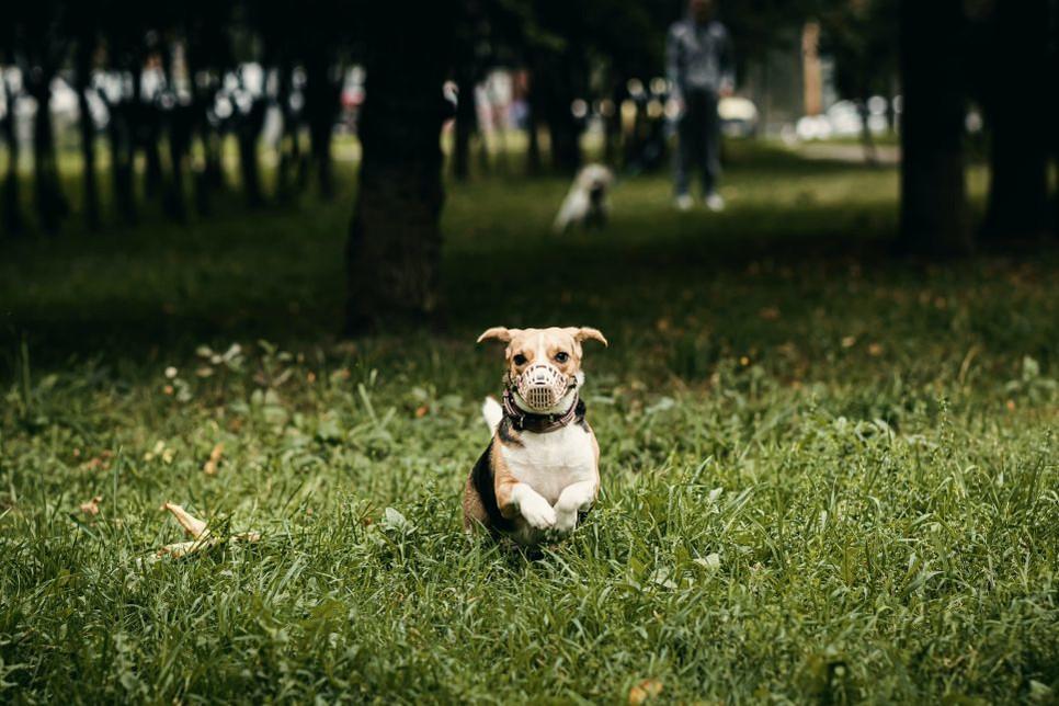 Kiedy warto udać się do weterynarza z psem zjadającym odchody?