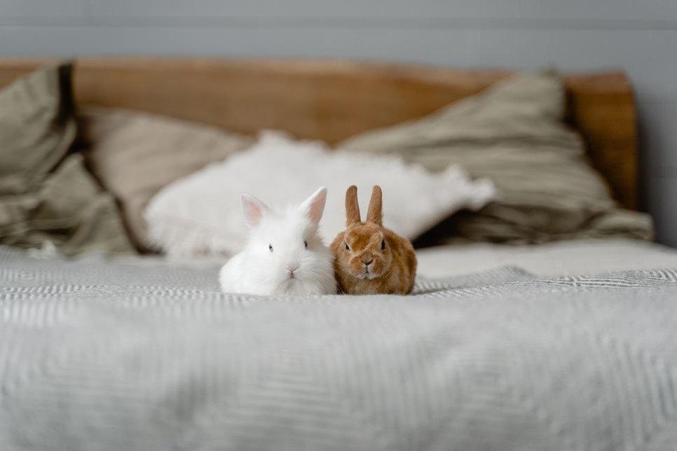 Czy należy odrobaczać króliki?