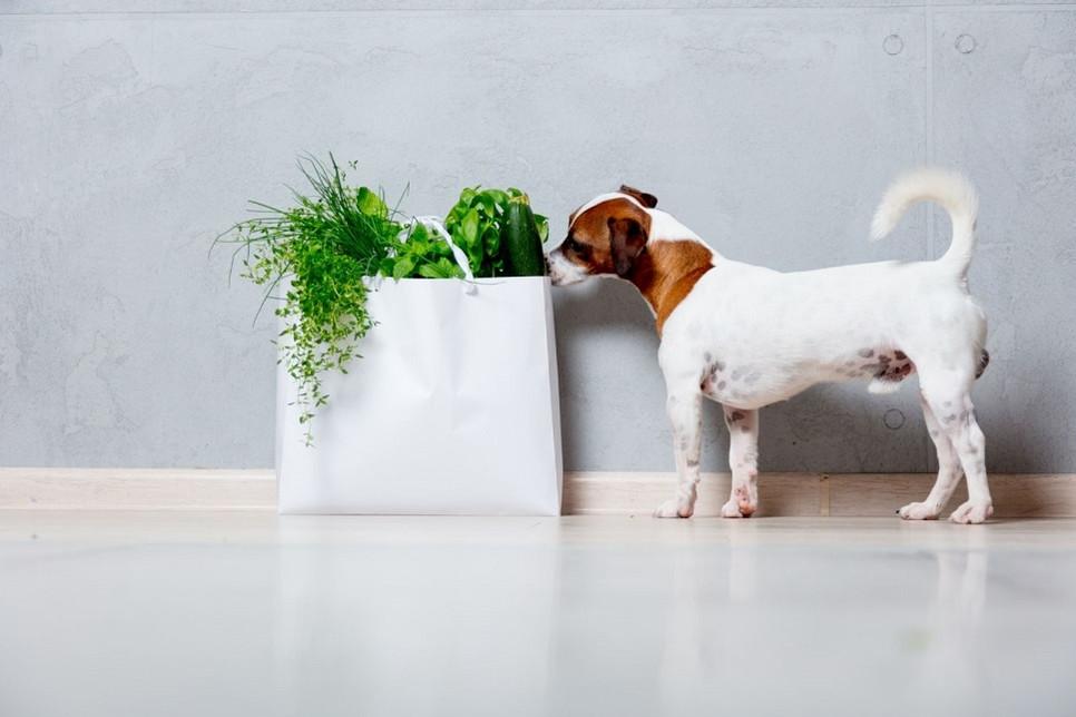 Jak działa czystek dla psa i kota?
