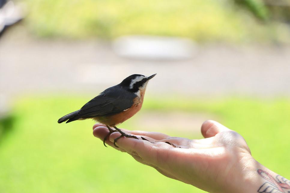 Jakie są najpiękniej śpiewające ptaki w Polsce?