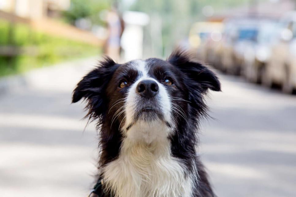 Choroba lokomocyjna u psów, jak zapobiec chorobie lokomocyjnej?