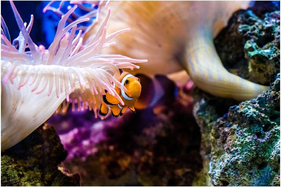 Jak się przygotować do pierwszego akwarium, czyli zakładanie pierwszego akwarium