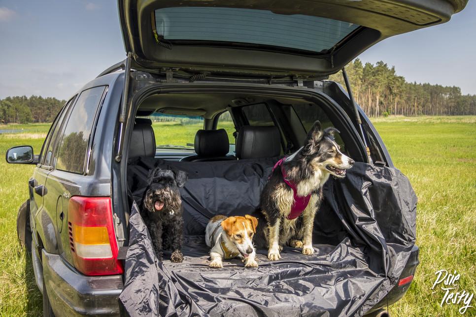 Pies w podróży samochodem - co musisz wiedzieć?