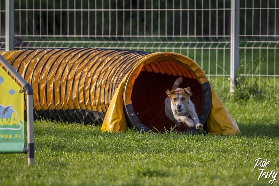 Psie sporty, jak zaktywizować psa?