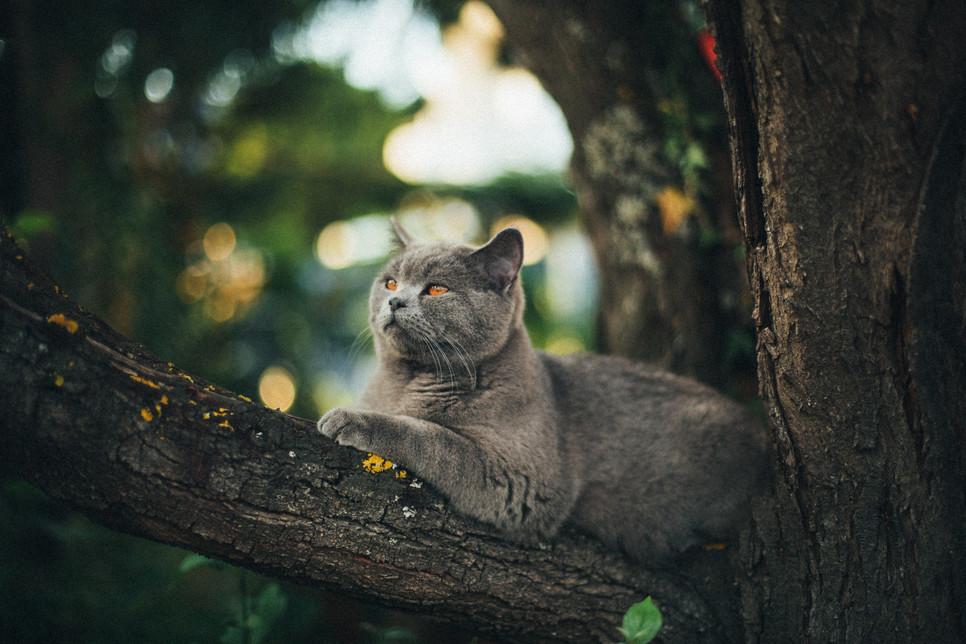 3 śmiertelne choroby, którymi może się zarazić kot wychodzący
