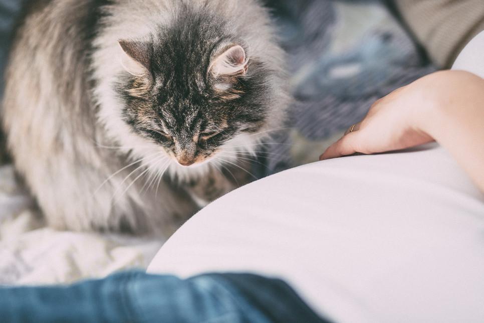 Jak przygotować kota na pojawienie się w domu noworodka?
