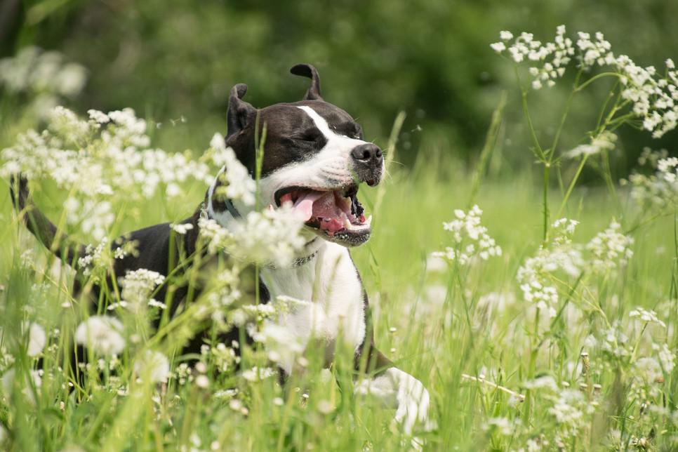 Zioła i przyprawy dla psów - kurkuma