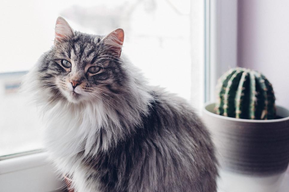 Jak zaopiekować się kotem na czas na wyjazdu na wakacje? Czy kot może pozostać sam w domu?