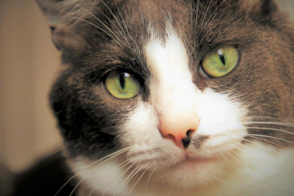Czy czarne kropki na nosie i pyszczku kota lub psa są powodem do obaw?