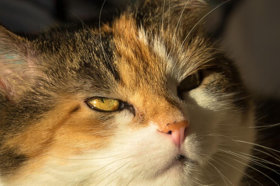 Twój kot kicha, a Ty zastanawiasz się dlaczego? Jest wiele powodów i warto je poznać, aby w porę móc pomóc swojemu pupilowi.