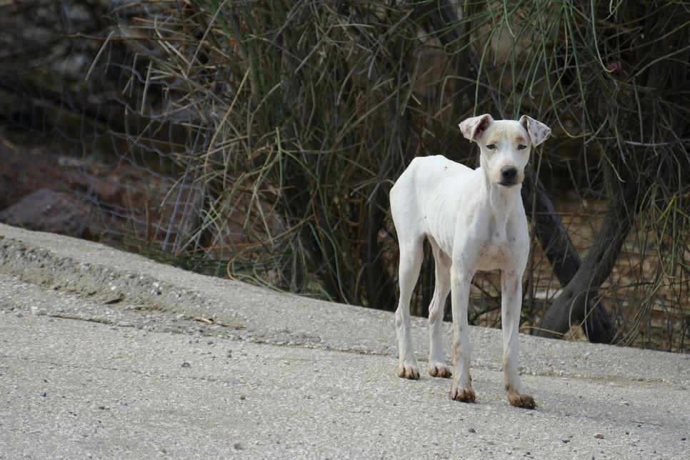Jak chronić stawy psów? Jak nie dopuścić do rozwoju dysplazji?